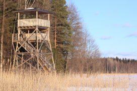 Pehkijärven lintutorni