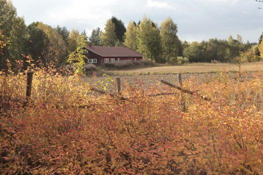 Kaukjärvi