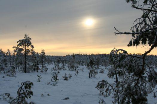 Torronsuon kansallispuiston latutiedote 27.3.2018