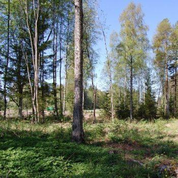 Myydään: Tontti, Teurontie 449, 31250 Tammela, Suomi.