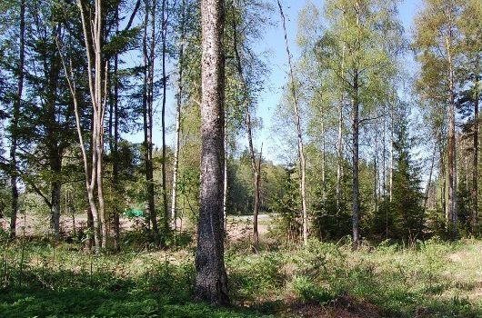 Myydään: Tontti n. 6000 m2, Teuro-Kuuslammi, Hintapyyntö 18000€