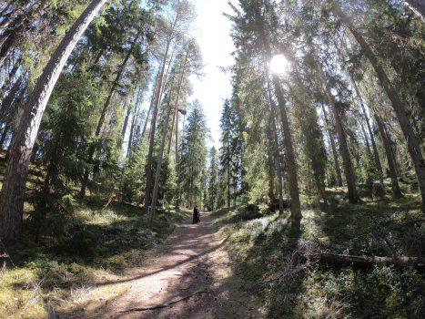 Kettumetsän polku, Liesjärvi, Tammela