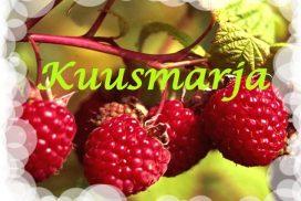 Kuusmarja, Kylä-Mattilan tila