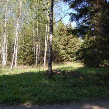 Myydään: Tontti, Kuuslammintie 17, 31250 Tammela, Suomi.