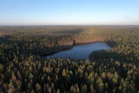 Peukalolammin laavu, Liesjärven kansallispuisto