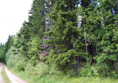 Myydään: Tontti, Luitparontie 143, 31380 Tammela, Suomi.